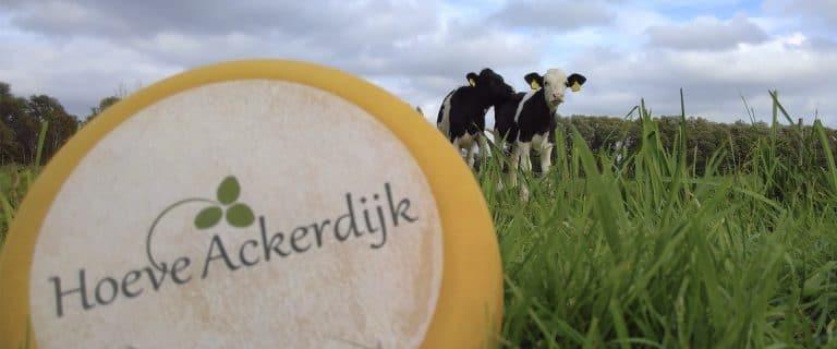 Hoeve Ackerdijk - kaas