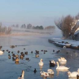 Zouteveen midden-Delfland watervogels