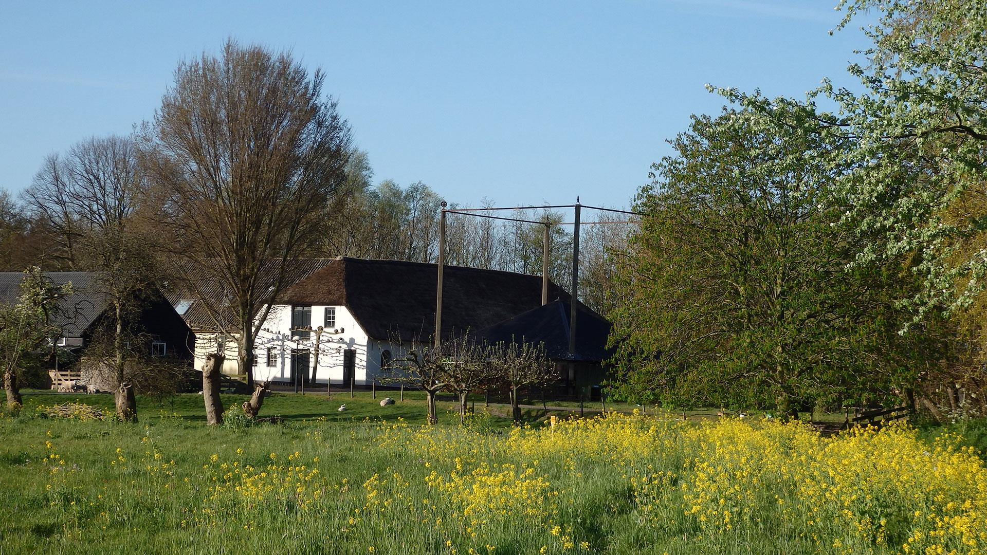 uitzicht op de boerderij van B&B 't Kraaijenest met rechts de hooiberg en links de boerderij en bloeiend koolzaad in de voorgrond in Midden-Delfland